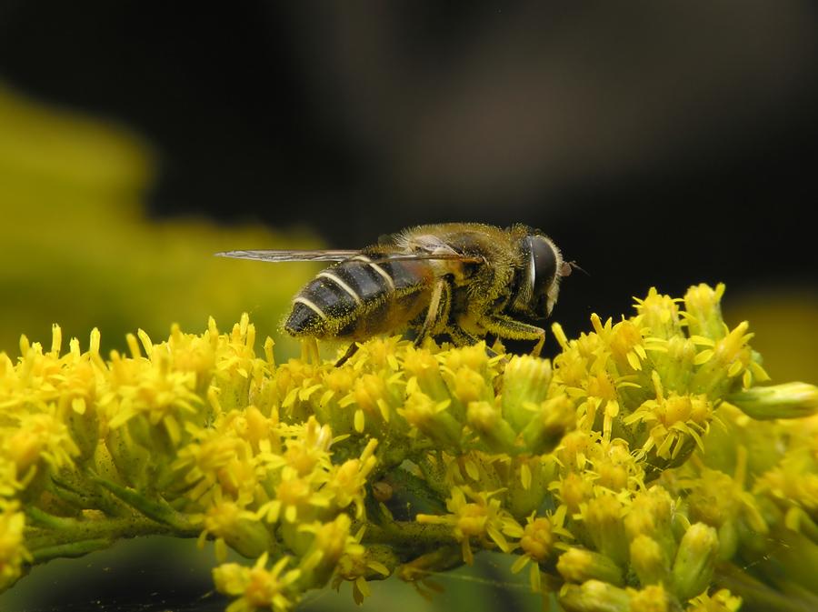 Bloemen hebben stuifmeel nodig om bloemenzaad te produceren